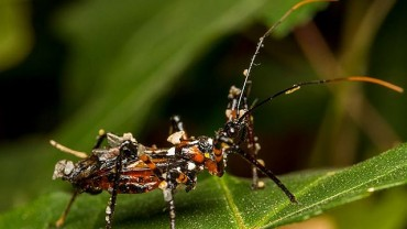 The Assassin Bug