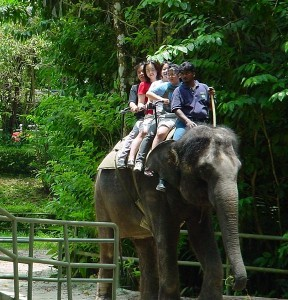 576px-Singapore_elephant_riding_in_zoo_2002