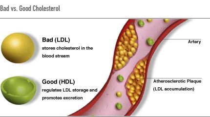 Increase in the production of cholesterol
