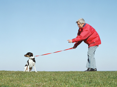 Woman pointing at Jack Russell, holding lead, outdoors