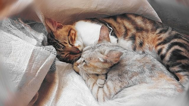 Cuddling in the bed with a cat