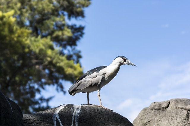 Evolution into birds