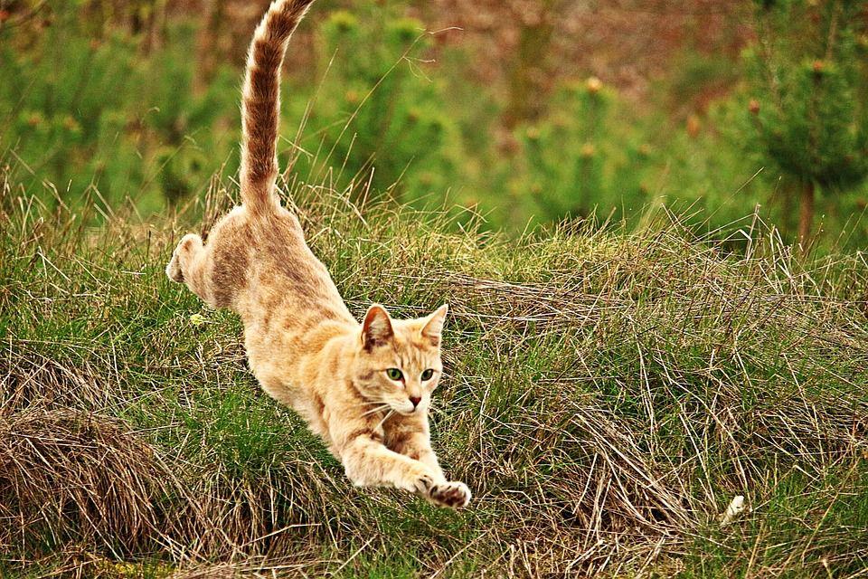 Landing upright